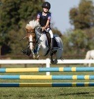 Perfect Allrounder Pony