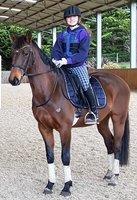 Warmblood x Stock Horse