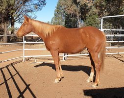 Thoroughbred Filly