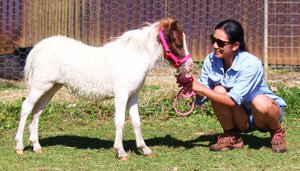 Miniature horses and ponies for sale | Horse Deals | Australia