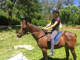Reg. Australian Riding Pony