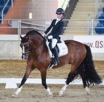 A Special Dressage Horse
