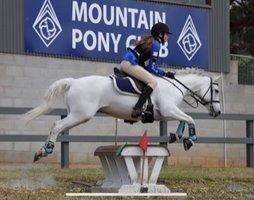 Fantastic pony club mount