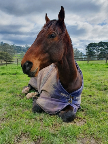 Relaxing in his paddock
