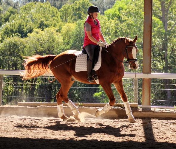 Leo's canter is super comfortable