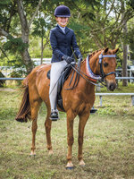 Beautiful Schoolmaster Pony
