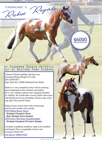 Advert designed by LPH Equestrian Graphics