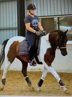 Easy Dressage Horse