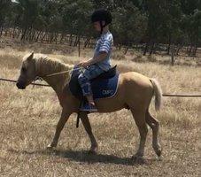 Palomino Kid's Show Pony
