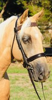 Stunning Quarter Horse Mare