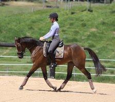 Flashy Stock Horse!