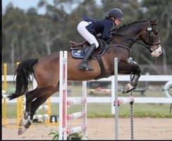 Eventer & Show Jumper
