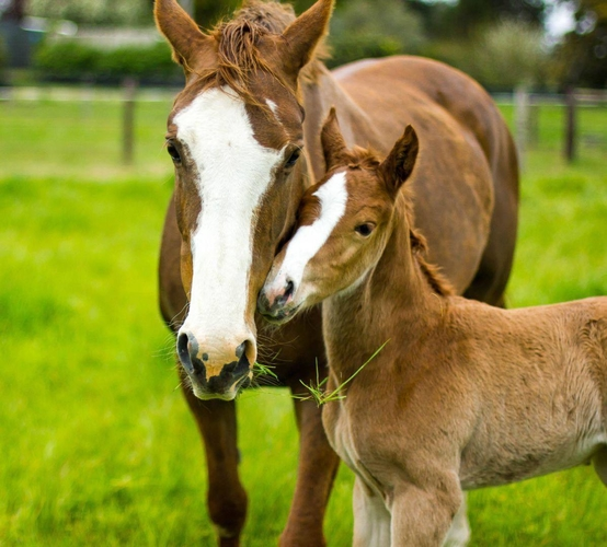 Whitney and Renegade Z Filly