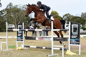 Reliable Juniors showjumping mount