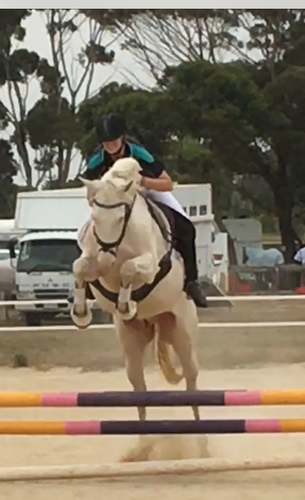 Jumped 90cm with nervous rider, scope + confidence to go higher.