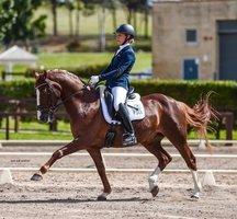 FEI German Riding Pony - Regal Don Rico