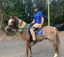 Amazing Allrounder Welsh Pony For Sale