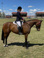 Ideal Show Mare