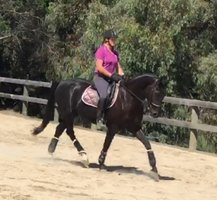 Dressage/Eventing Potential!!