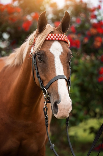 Perri (Katren Park Crimson Thorne) Image Taken 19 March 2021, Jodie Andrews Photography