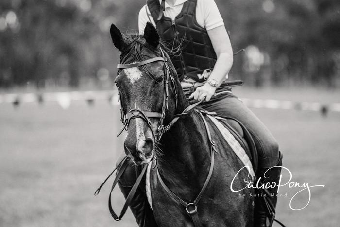Calico Pony