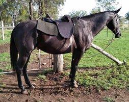 Beginners Horse