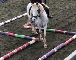 Altivo Cheeky Fun Pony