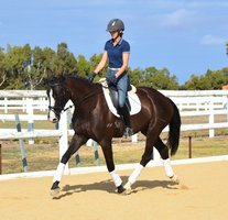 Eye Catching AWHA Registered Mare