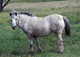 Appy Pony - Information Wanted