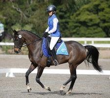 Ellie- WB x Riding Pony