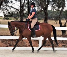 Competitive Eventing Prospect