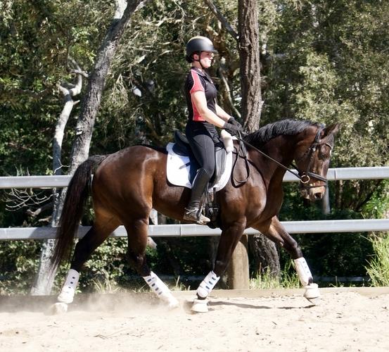 4 Gold Equestrian