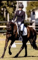 Talented Sweet Stock Horse