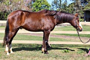 Stock Horse x Clyde