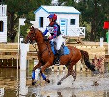 Super Eventing & SJ Riding Pony