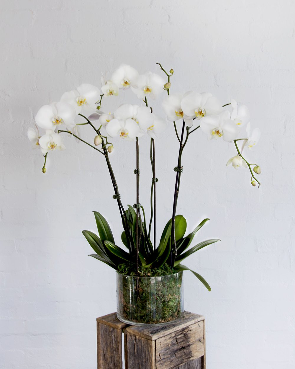 Orchids-Tall-Cover