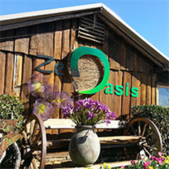 Zen Oasis