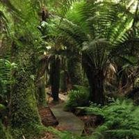 Share house Fern Tree, Tasmania $225pw, Shared 4+ br house