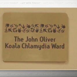The John Oliver Koala Chlamydia Ward