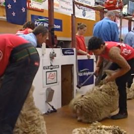 Shearing Gang – Shearing Competition