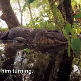 Swamp People Season 8 Sneak Peek