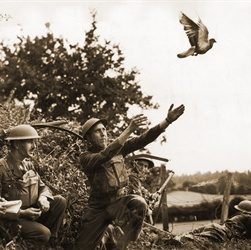 Pigeons Awarded First Dickin Medals for Bravery