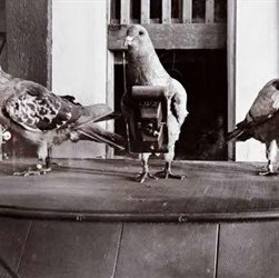 Neubronner Applies for Pigeon Camera Patent