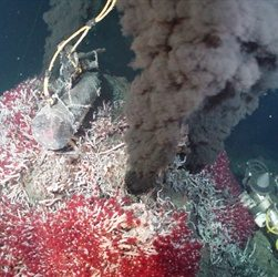 Hydrothermal Vents Discovered