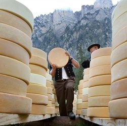 First Commercial Cheese Factory
