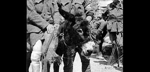 The Man With the Donkey – John Simpson Kirkpatrick