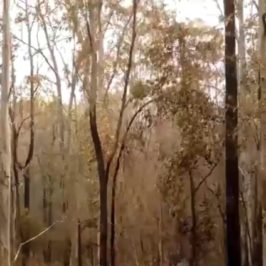 Russell Crowe on Climate Change – Fire Fight Australia