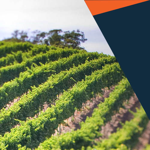 Industry 4.0 for Wine Makers