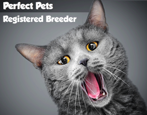 Perfect Pets Registered Breeder