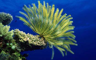 Lifesaving Seaweed & Simple Habits to Make You Rich & Slim